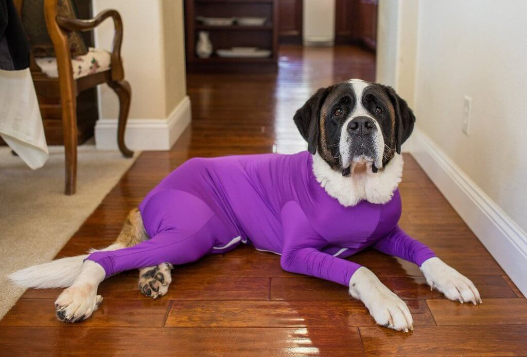dog leotards 10 (1)