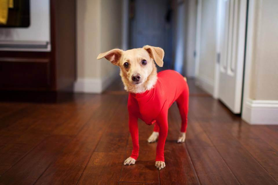 dog leotards 4 (1)