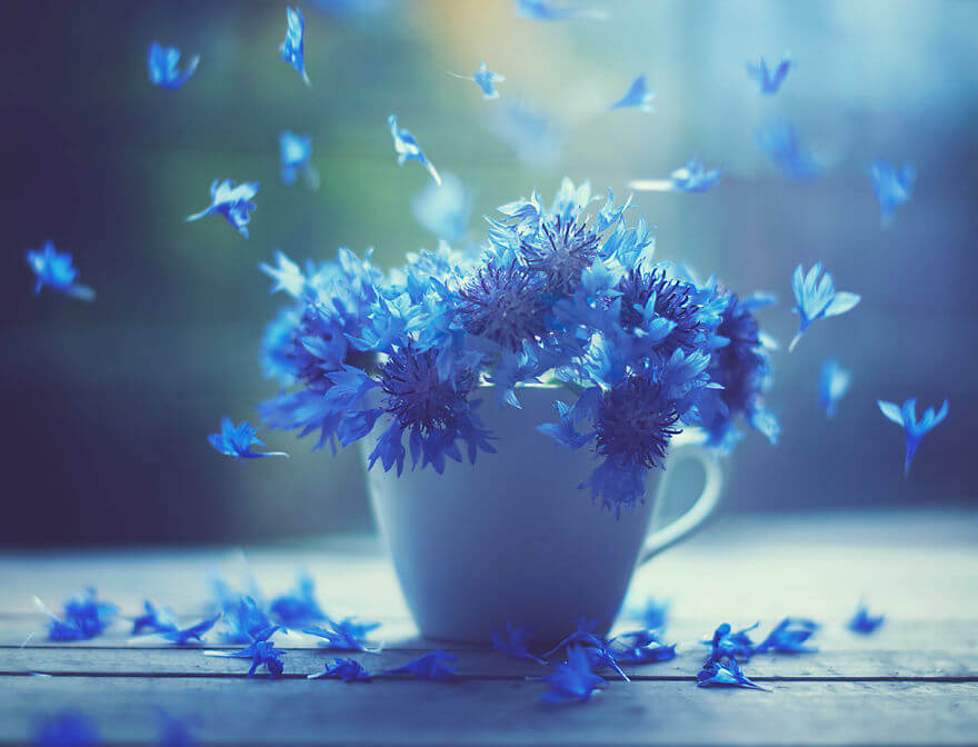 whimsical flower images ashraful arefin 1 (1)