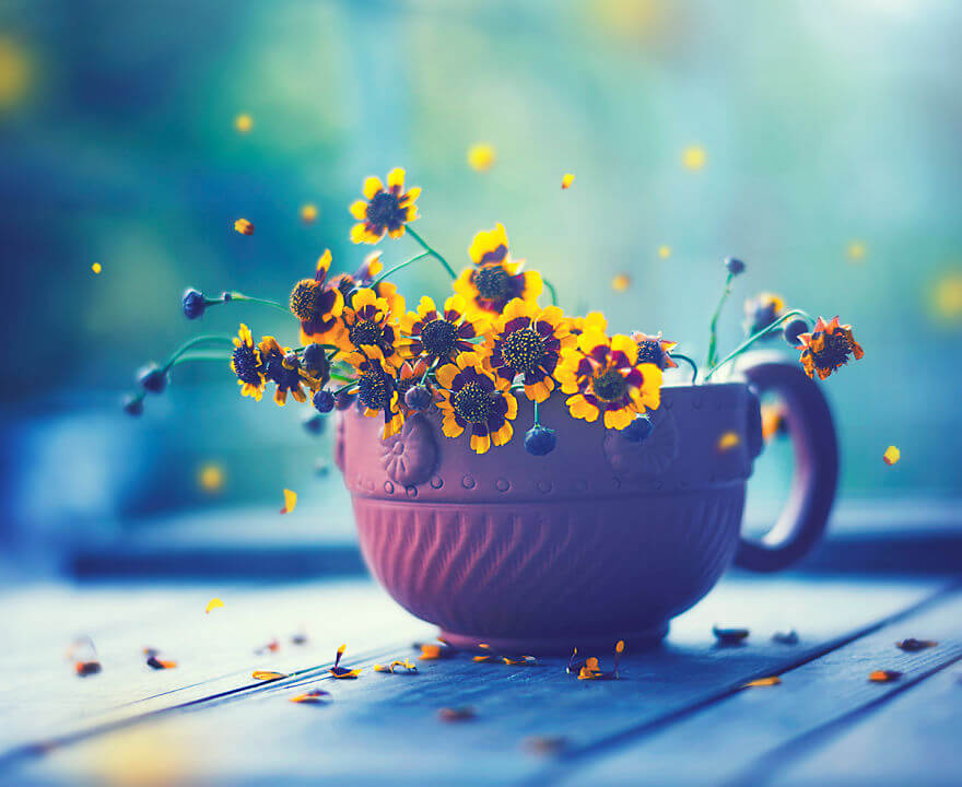 whimsical flower pics ashraful arefin 11 (1)