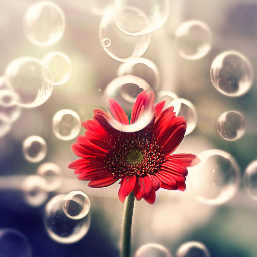 whimsical flower pics ashraful arefin 12 (1)