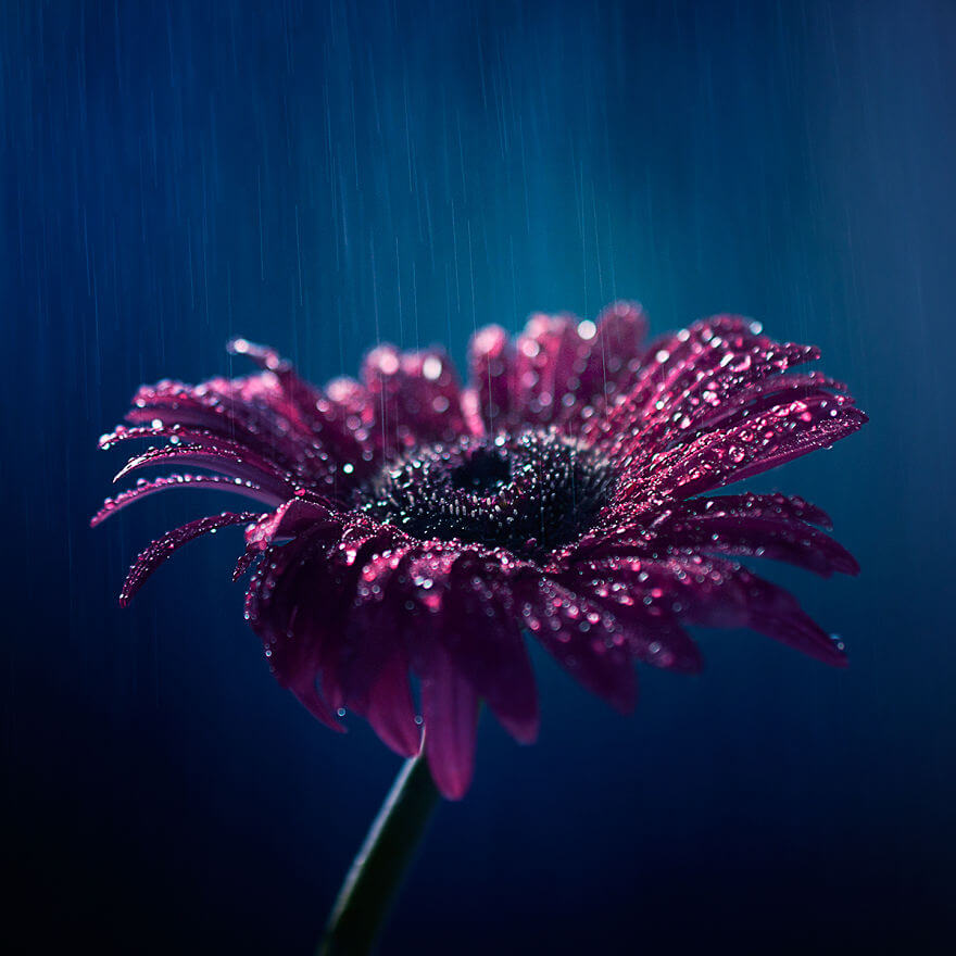 whimsical flower pics ashraful arefin 13 (1)