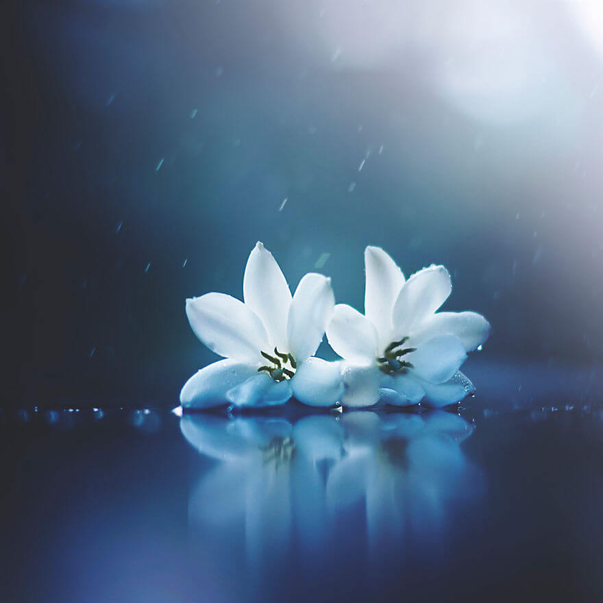 whimsical flower images ashraful arefin 14 (1)