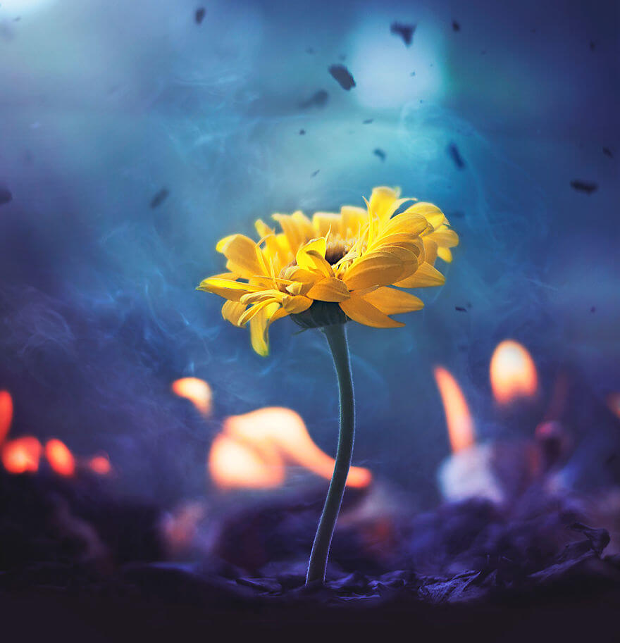 whimsical flower images ashraful arefin 15 (1)