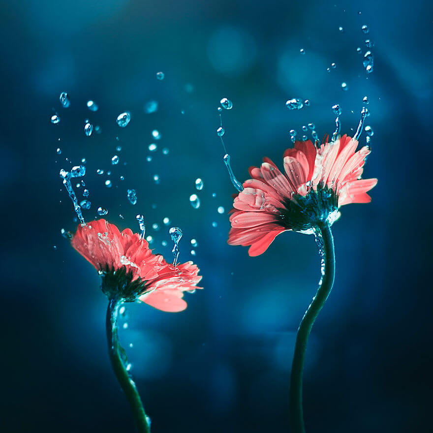 whimsical flower images ashraful arefin 2 (1)