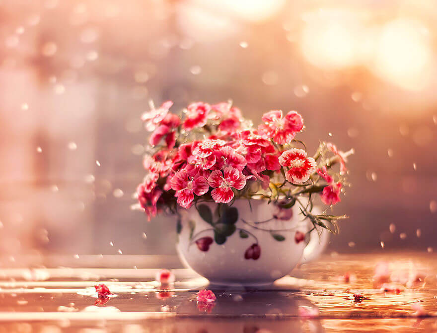 whimsical flower images ashraful arefin 3 (1)