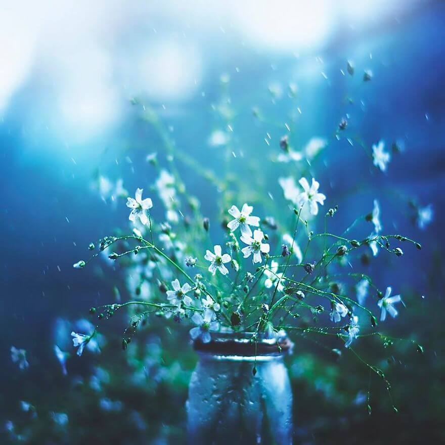 whimsical flower pictures ashraful arefin 4 (1)