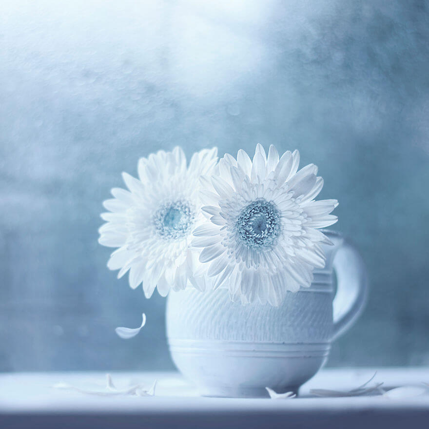 whimsical flower pictures ashraful arefin 5 (1)