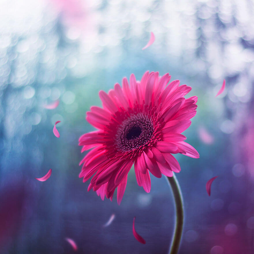 whimsical flower pictures ashraful arefin 6 (1)