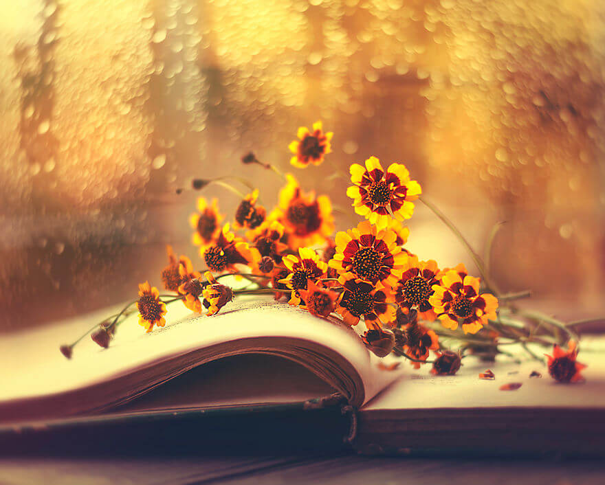 whimsical flower pictures ashraful arefin 7 (1)