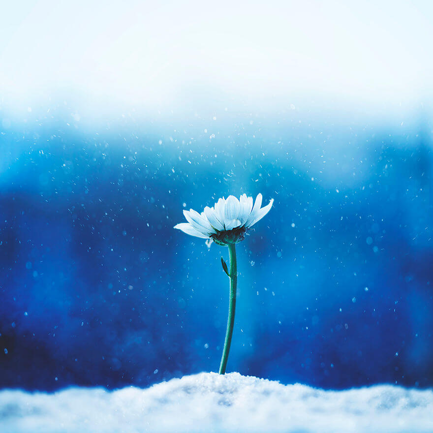 whimsical flower pictures ashraful arefin 8 (1)