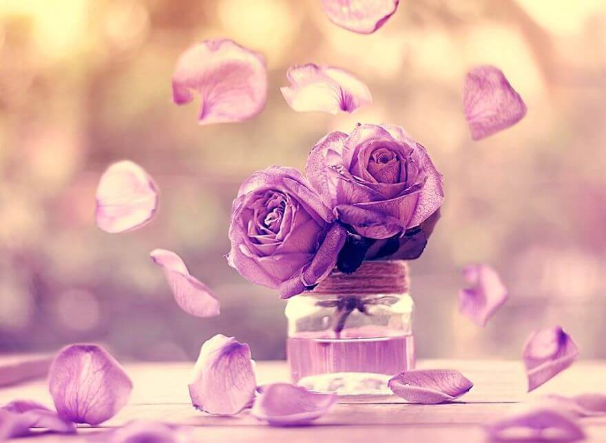 whimsical flower pics ashraful arefin 9 (1)