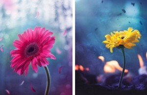 whimsical flower images feat (1)
