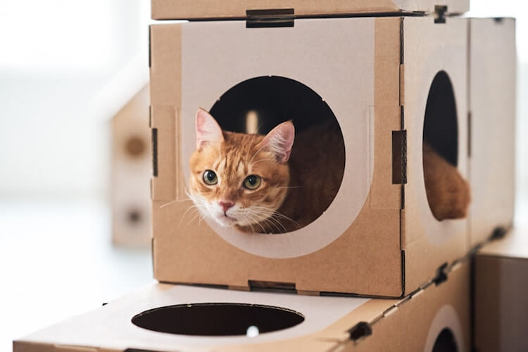 Cardboard Furniture for Cats 7 (1)