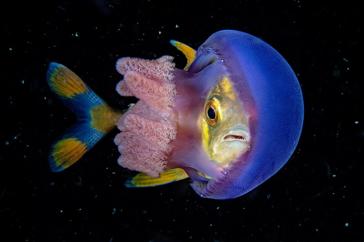 Winners of the 2018 Underwater Photographer of the Year awards 10 (1)