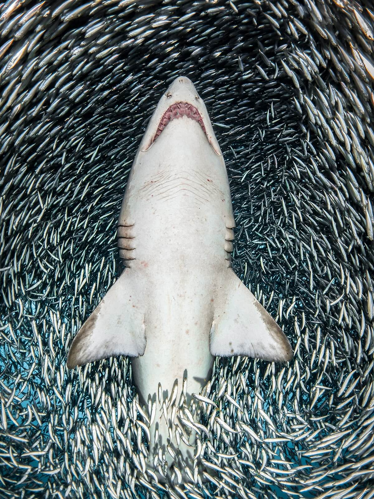 Winners of the 2018 Underwater Photographer of the Year awards 11 (1)