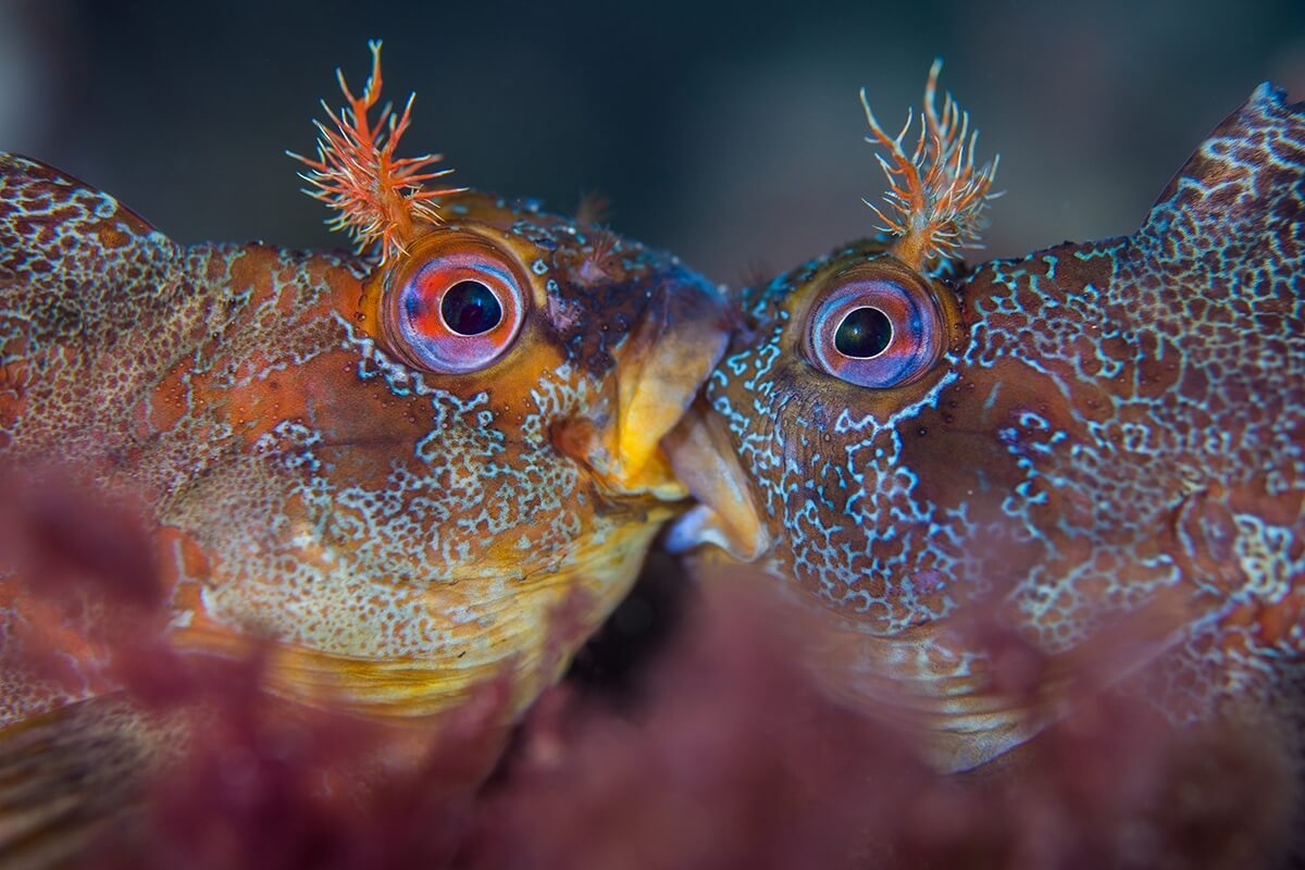 Winners of the 2018 Underwater Photographer of the Year awards 13 (1)
