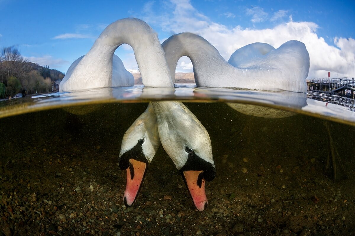 Winners of the 2018 Underwater Photographer of the Year awards 3 (1)
