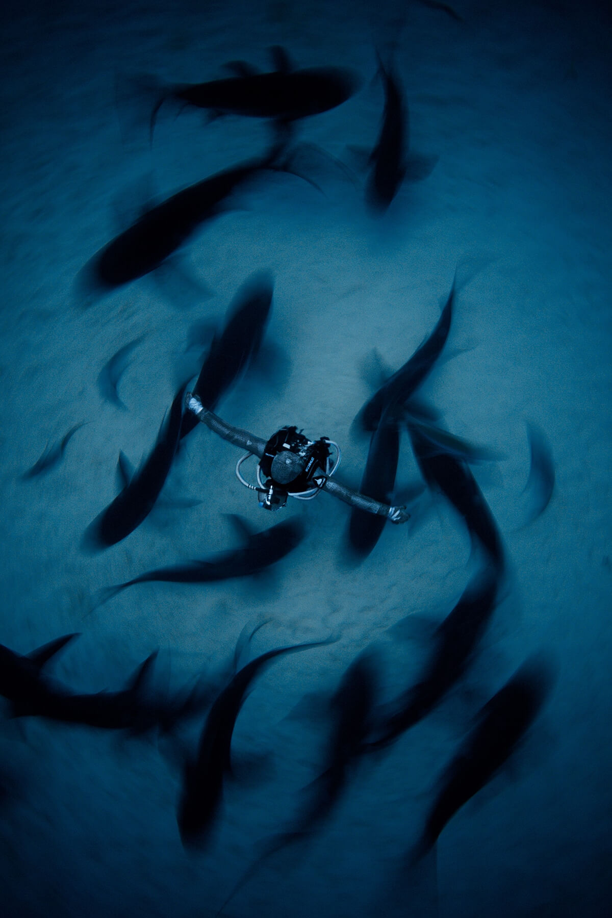 Winners of the 2018 Underwater Photographer of the Year awards 6 (1)
