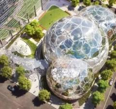 amazon rainforest office feat (1)