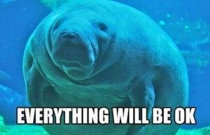 calming manatee feat (1)