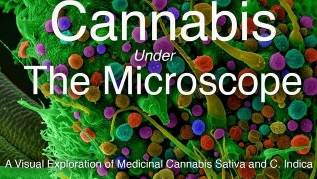 cannabis under the microscope feat (1)