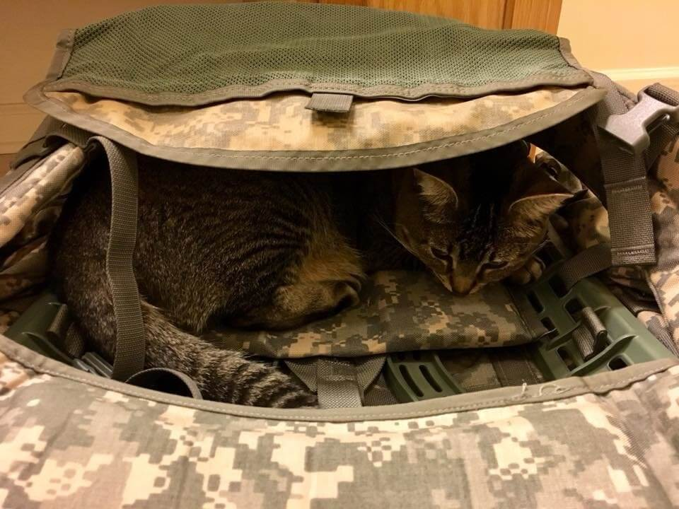 cat follows soldier everywhere 7 (1)