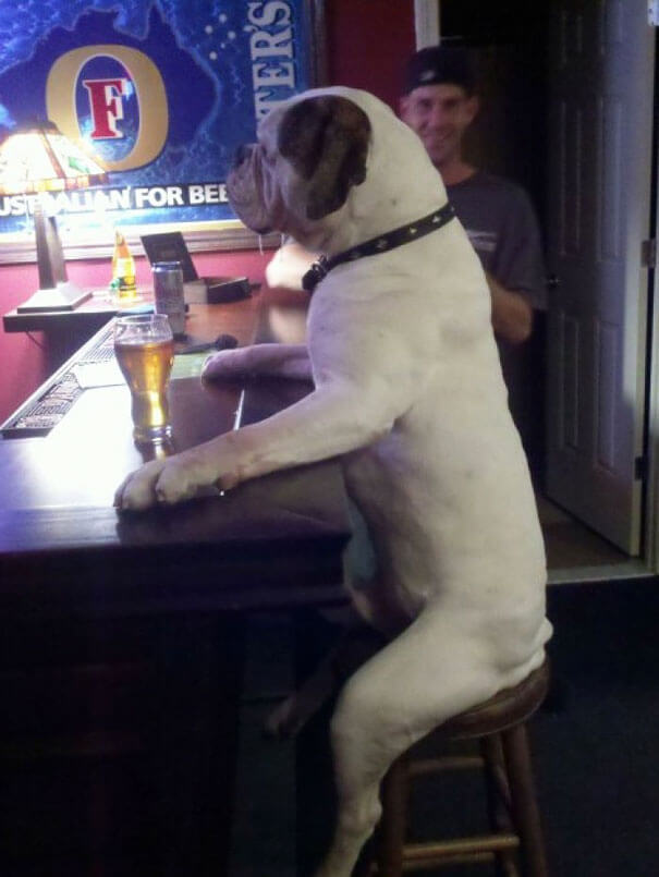 dogs doing human things 22 (1)