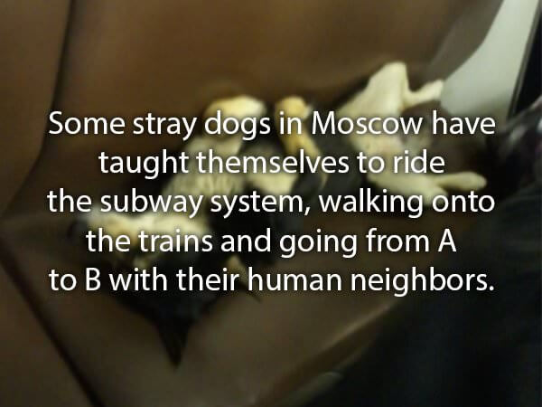 cool facts about golden retrievers and other dogs 16 (1)