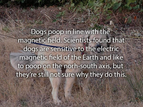 awesome facts about golden retrievers and other dogs 22 (1)