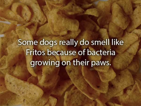 fun facts about dogs 4 (1)