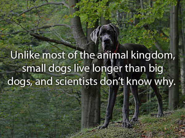 fun facts about dogs 8 (1)