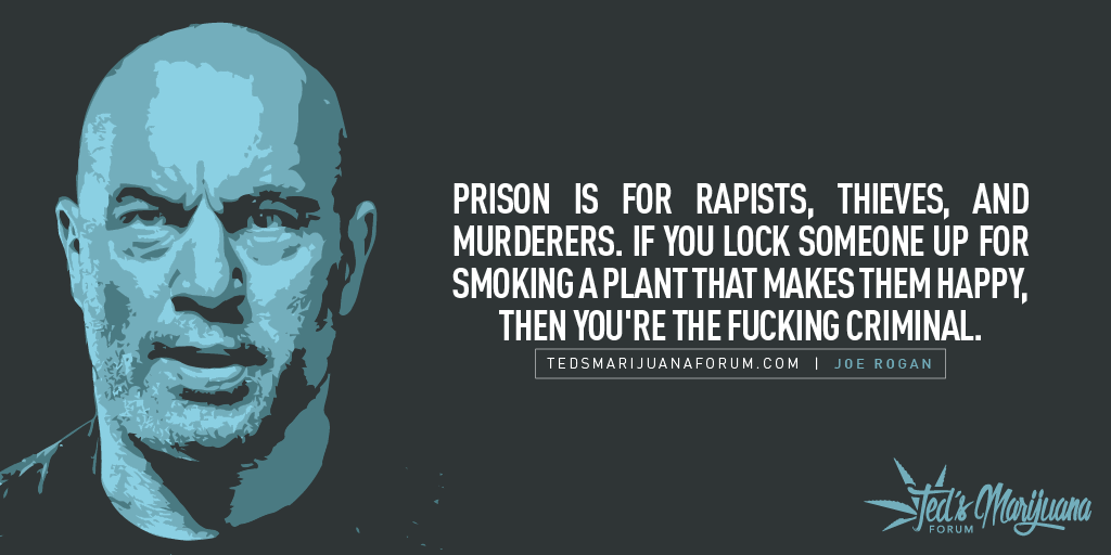 joe rogan quotes 3 (1)