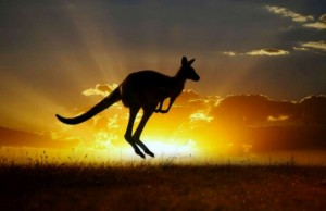kangaroo population doubles in australia feat (1)