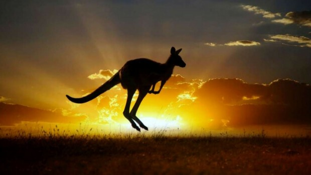 did you know there are almost twice as much kangaroos in australia than humans