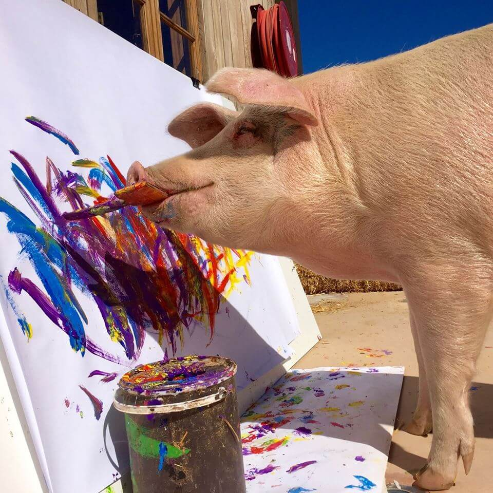 pigcasso the painting pig 1 (1)