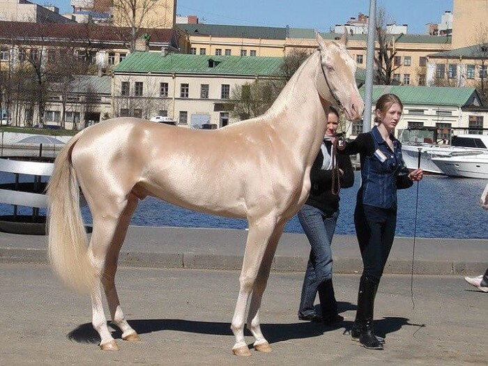 rarest horse breed 1 (1)