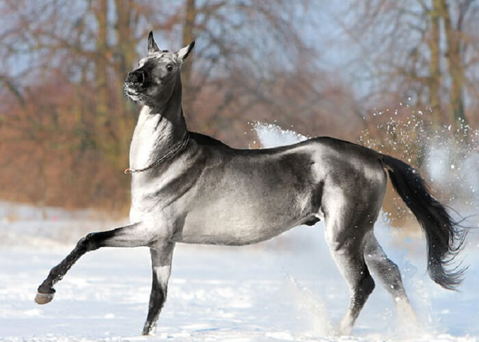 20 of the rarest and most beautiful horse breeds in the world