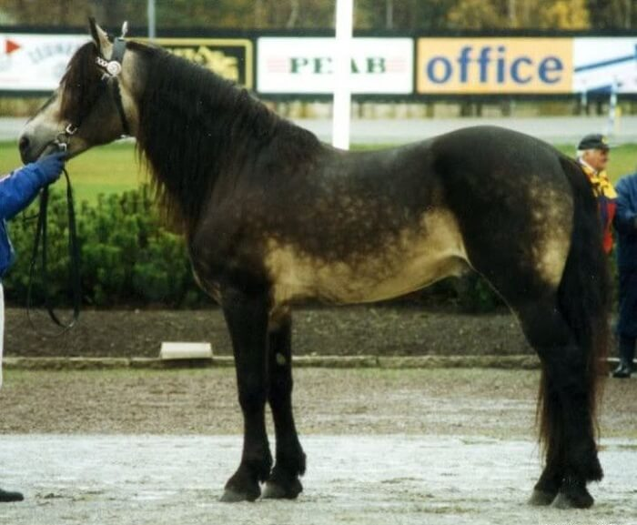 rarest horse breed 11 (1)