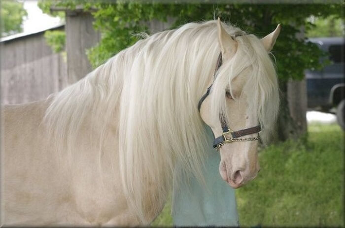 rarest horse breed 13 (1)