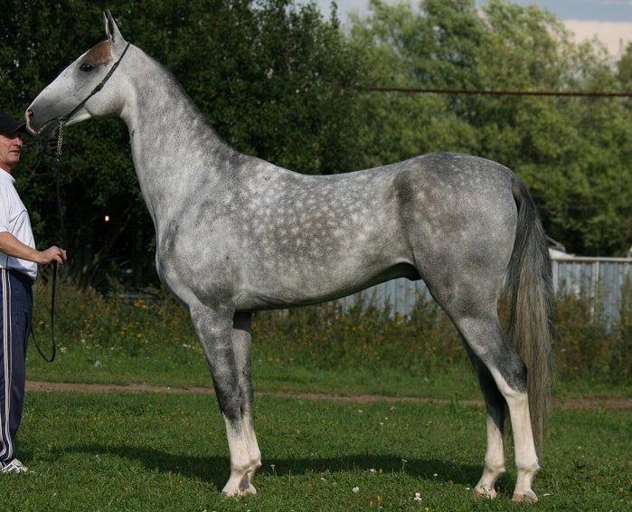 rarest horse breed 14 (1)