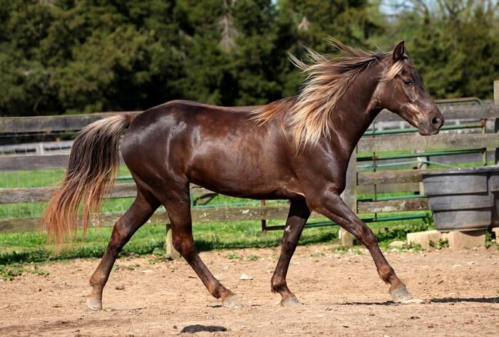 rarest horse breed 15 (1)
