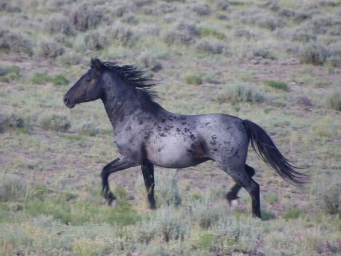 rarest horse breed 17 (1)