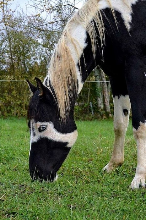 rarest horse breed 19 (1)