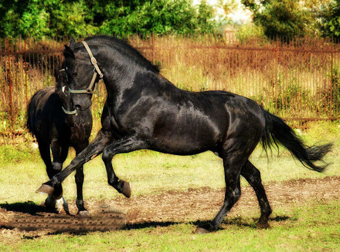 rarest horse breed 6 (1)