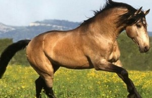 rarest horse breeds of the world feat (1)