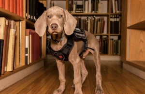 riley puppy museum of fine art boston feat (1)