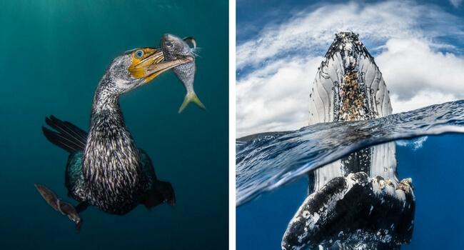 winners of the underwater british awards feat (1)