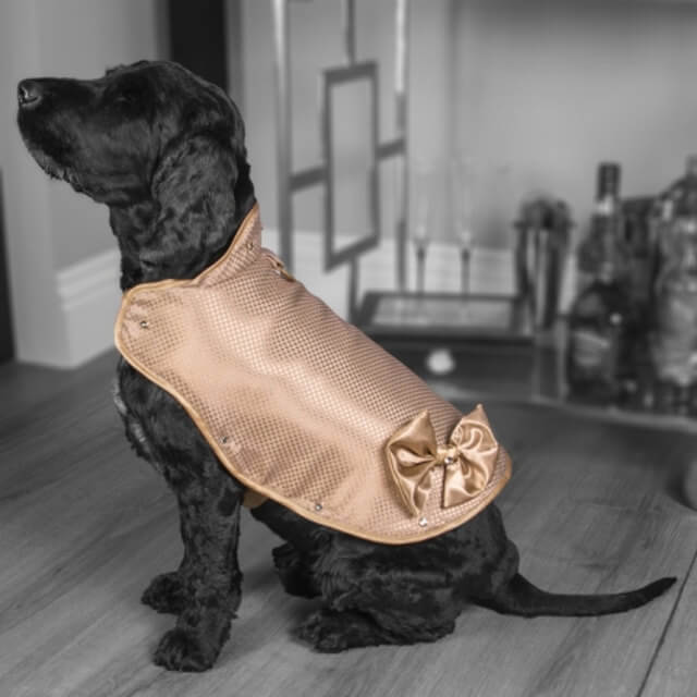 130000 dollars gold diamond protective jacket for dogs 1 (1)