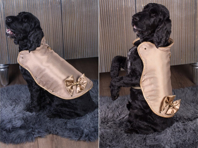 130000 dollars gold diamond protective jacket for dogs 2 (1)